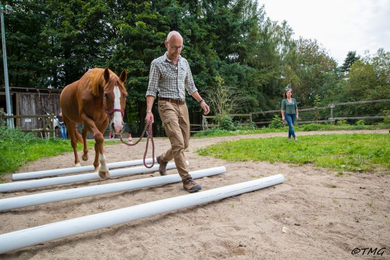 Person mit Pferd